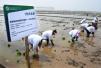 青岛城阳盐碱地收获海水稻 实打亩产量261.39公斤