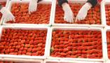"""沂源:""""草莓姐""""的""""莓""""丽事业"""