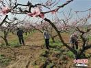 """河南新野县: """"精准扶贫企业贷款""""助贫困户增收"""