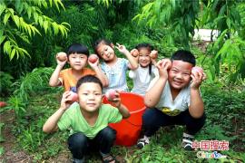 河南内黄:采摘校园果实 分享收获快乐