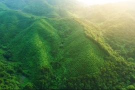 一片茶叶的光山传奇