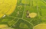 河南罗山:彩色稻田铺就美丽生活新画卷