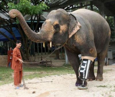 盘点世界上那些坚强的动物们-中国搜索国际