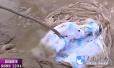 济南市民黄河边钓鱼 竟钓到刚出生的双胞胎死婴