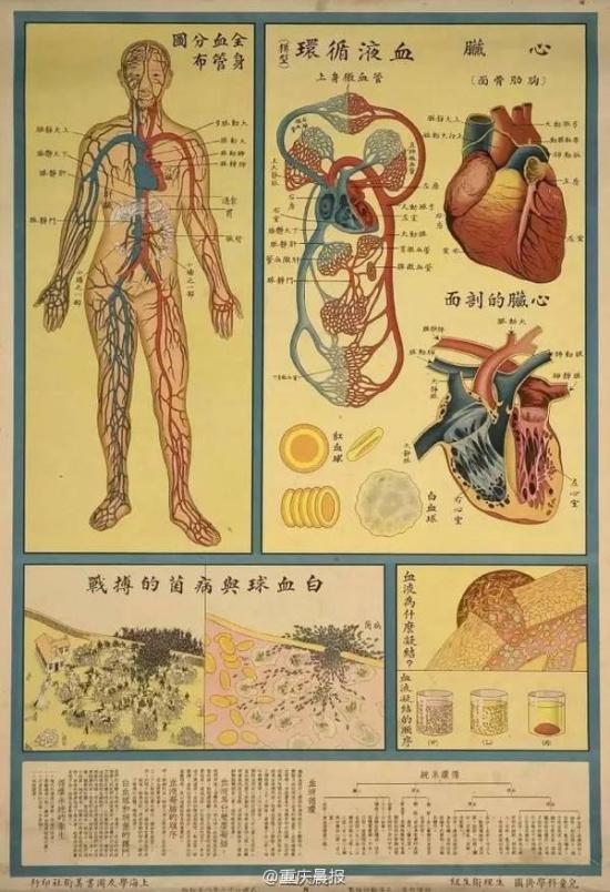 人体生理构造固�_人体似工厂 民国这样宣传儿童生理卫生