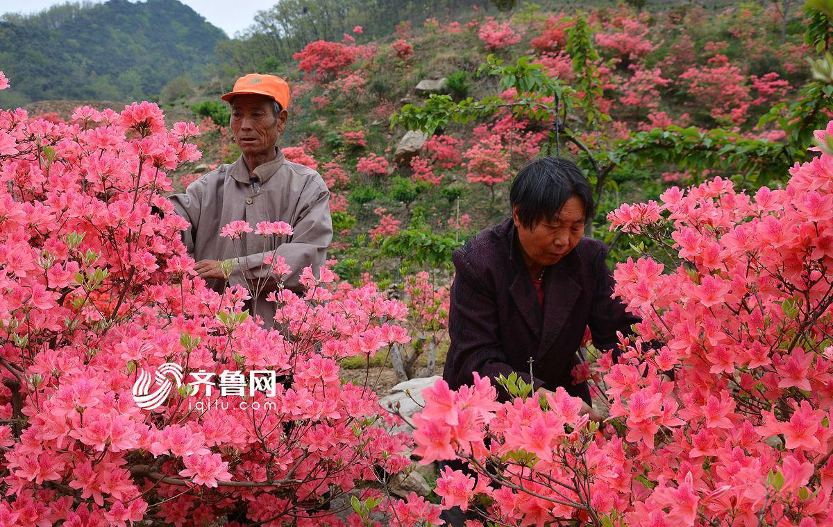 """六旬夫妻抱病深山种花20年 百亩荒山变""""私家花园"""""""