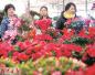 春节临近洛阳花卉市场年宵花走俏 价格略有些上浮