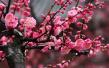 春暖花开 这份青岛最全赏花攻略请收好