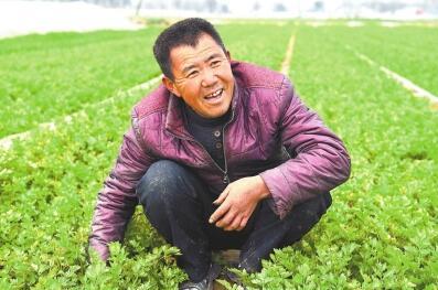 蘭考縣武營村:好好種蔬菜早日奔小康