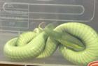 买盆花上盘了条毒蛇