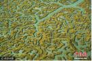 航拍绿色湿地纵横交错:宛如大脑特写