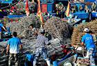 黄渤海休渔期结束