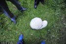 草地长6斤巨型蘑菇