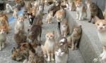 25平公寓养130只猫