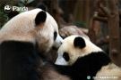 熊猫妈妈和熊猫宝宝