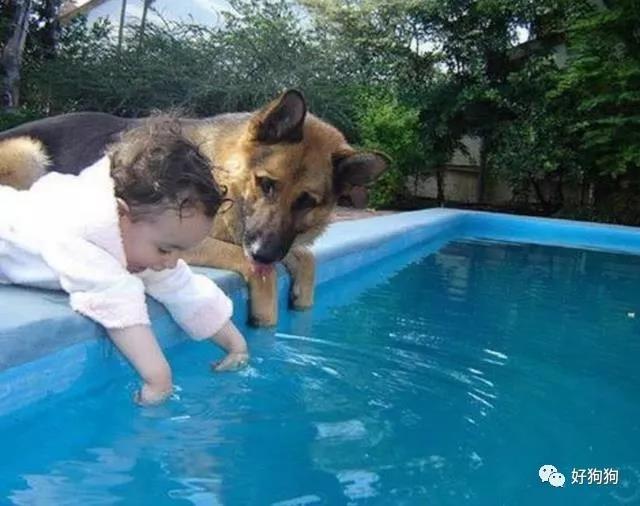 当狗子遇上萌娃