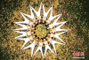 人体的艺术!瑜伽邂逅醉美秋景 落叶映衬似花朵