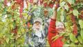 吉林白河林业局转型:林下产业火 生态旅游热