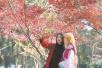 枫叶走红,栖霞山上演秋色大片