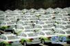 政策鼓励公众购买!明年起首付1.5成可买新能源车