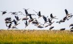 鄱阳湖的老人与鸟