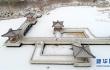 雪降银川 海宝公园雪景竟然这么美