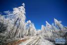南国之冬如童话世界