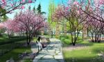 不用跑景区 明年春天杭州拱墅区河边就能赏樱花看桃林