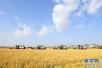 """山东发展农业""""新六产""""有了大方向 四种业态供你选"""