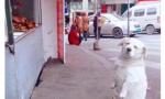小狗每天卖萌骗肉吃