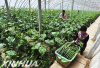 保障春节食品安全 60批次蔬菜样品抽检全部合格