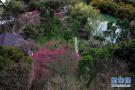 杭州西溪湿地:曲水寻梅