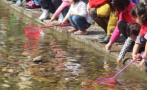 全杭州的家长都在抓蝌蚪?有教师建议用养蚕宝宝代替养青蛙