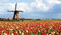 拿荷兰永居入籍更容易 融入考试免考新政将实行