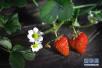 """草莓竟成最""""脏""""水果?抛开剂量谈毒性就是耍流氓!"""