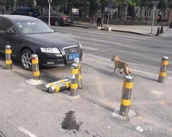北京多名儿童被恶狗咬伤 警方已抓捕10多条流浪犬