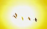 莫莫格湿地:鹤舞人间