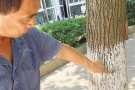 又到白蚁分飞季 杭州环境越来越利于白蚁繁殖?
