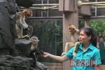 """端午节至 北京动物园为动物送上""""专属粽子"""""""