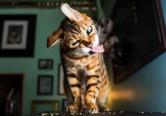 逗趣!爱上猫薄荷的喵星人