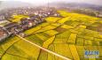 农村集体产权制度改革试点扩范围 如何保障农民权益?