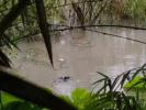 鳄鱼逃跑、美女被救…这些网传的四川暴雨消息都是假的