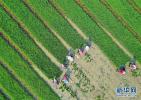 我国缺硒省份有22个 让硒和农产品奇妙反应