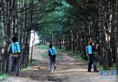 宁陵447名贫困户当上了生态护林员