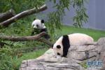 """北京动物园笼舍塞进旧床单、废报纸?专家:这是项特殊的""""福利"""""""