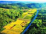 南京溧水晶桥现彩色水稻大地景观!你肯定没看过!