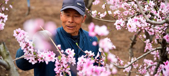 山东:三月春暖农事忙