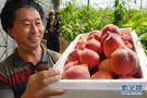 河北豐潤:設施農業助力鄉村振興