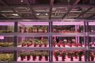 """""""植物工厂""""人工补光技术有多神奇?揭秘"""