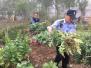村民为治疗肠胃疾病 私种22株罂粟被民警铲除